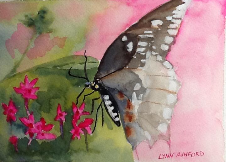 Lynn Ashford's Butterfly Bliss