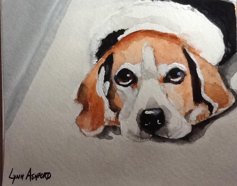 Lynn Ashford's Beagle
