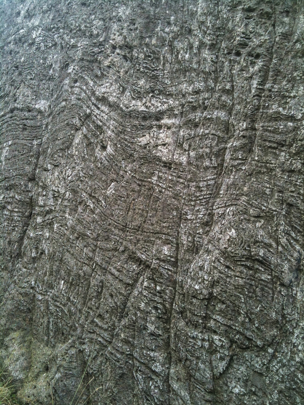 Flow banded rhyolite in our back garden, Nantperis