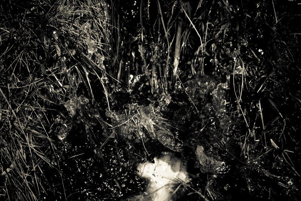 walking in the bog (88 of 141).jpg