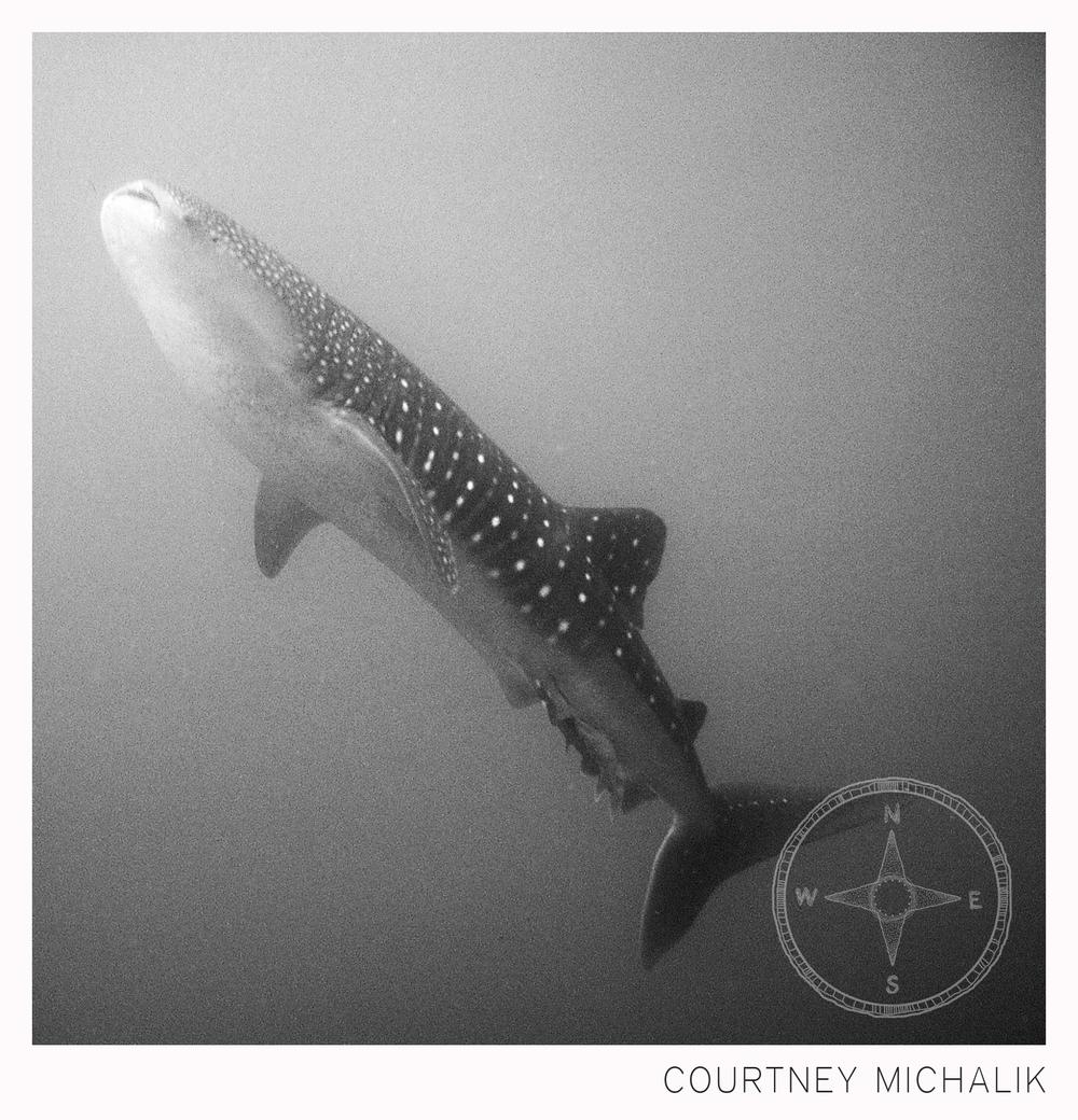 whaleshark_watermark.jpg