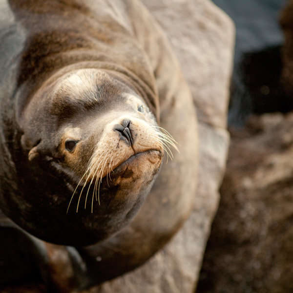 sealion_monterey-copy2.jpg
