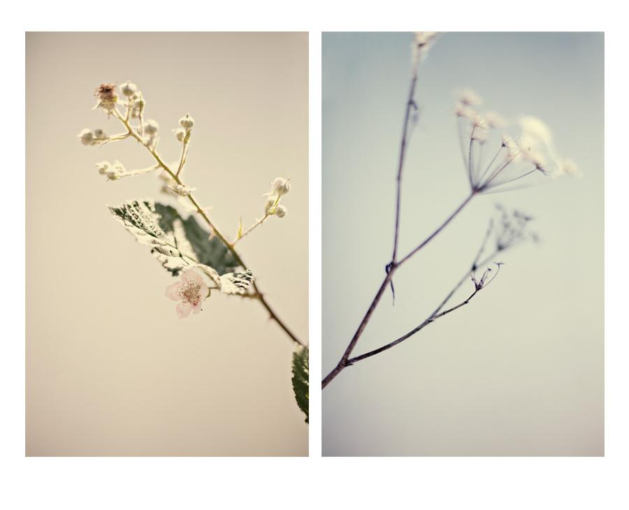 doubleflower.jpg