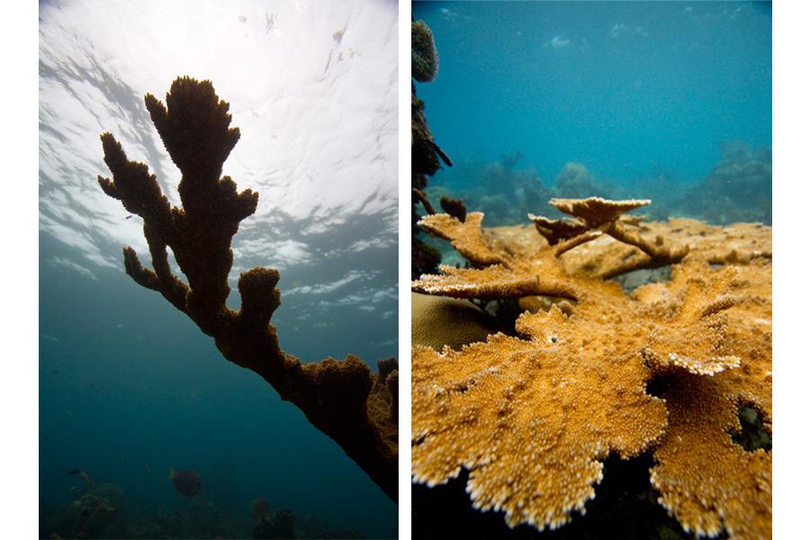 dominicanrepublic_coral.jpg