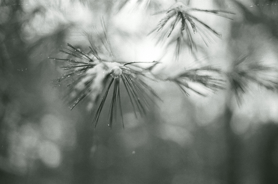 NMich_KodakPortra400_01.jpg