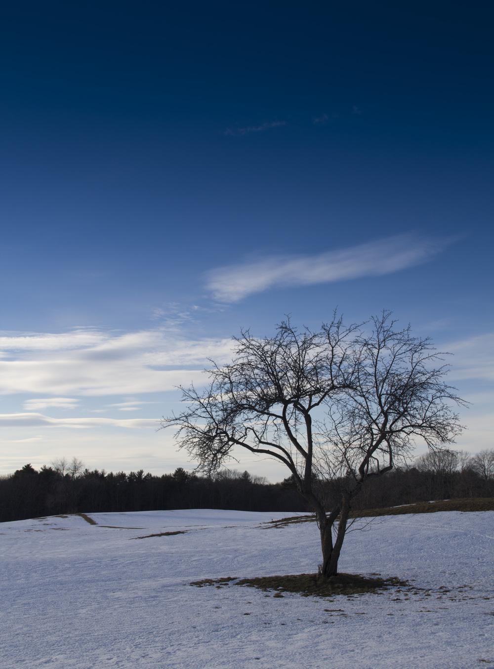 Tree_2IMG_1180.jpg