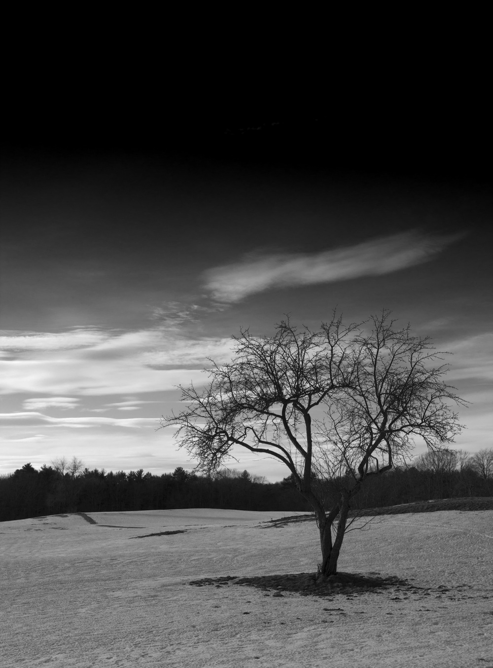 Tree_2IMG_1180BW.jpg
