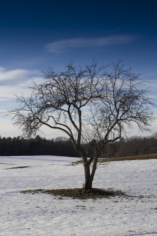 Tree1_IMG_1173.jpg