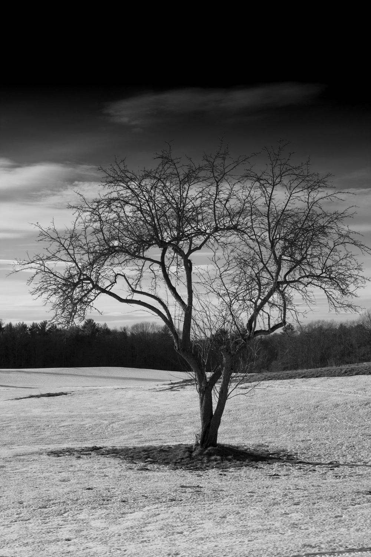 Tree1_IMG_1173BW.jpg