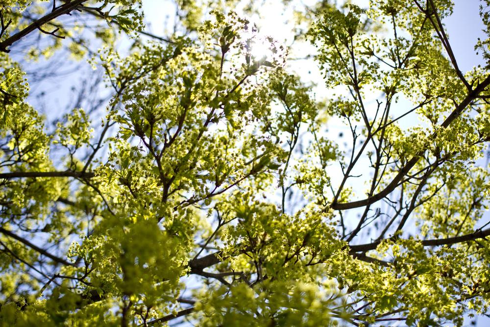 TreeIMG_2267.jpg