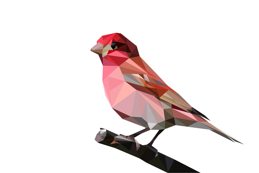 Purple Finch (although, it's sorta pink, huh?)