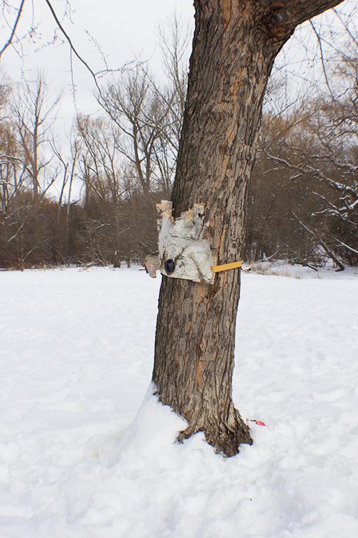 TreeMaskHighPark.jpg