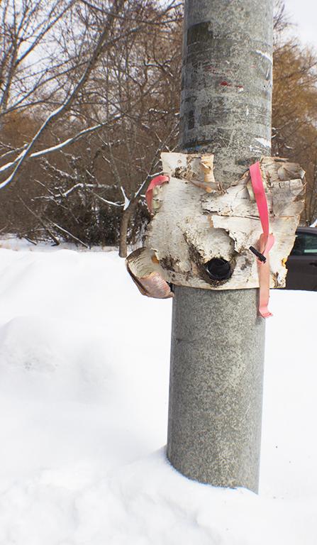 TreeMaskSteelPost.jpg