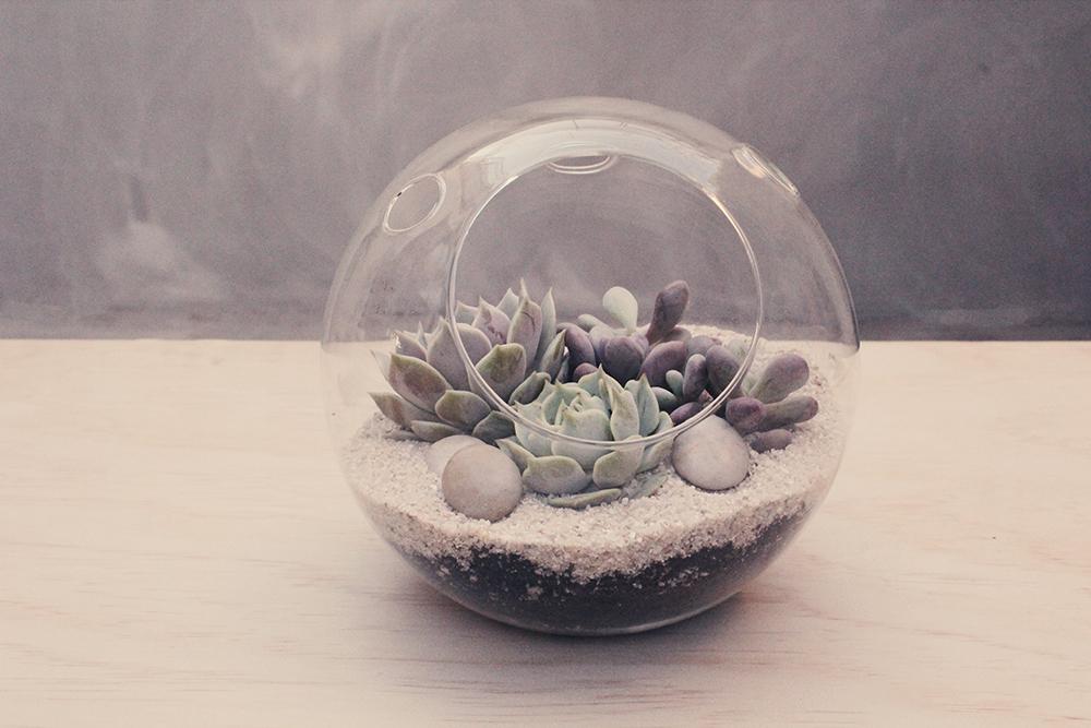 Succulents 101: DIY Terrarium & Tasting
