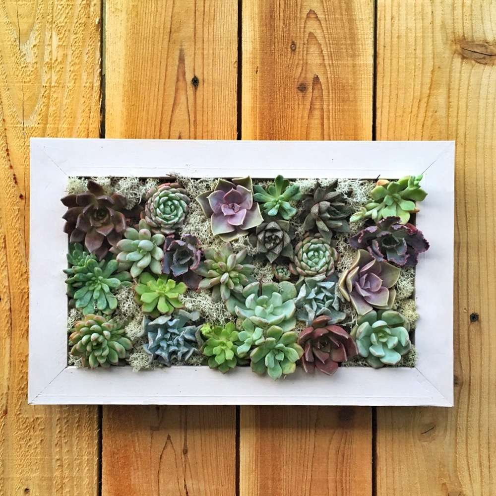 Succulent Wall Garden Workshop-:  Sunday |  August 11, 2016|  11-1pm  |  Makers Mess-Silverlake CLICK TO PURCHASE TICKETS: https://makersmess.frontdeskhq.com/events/1717868