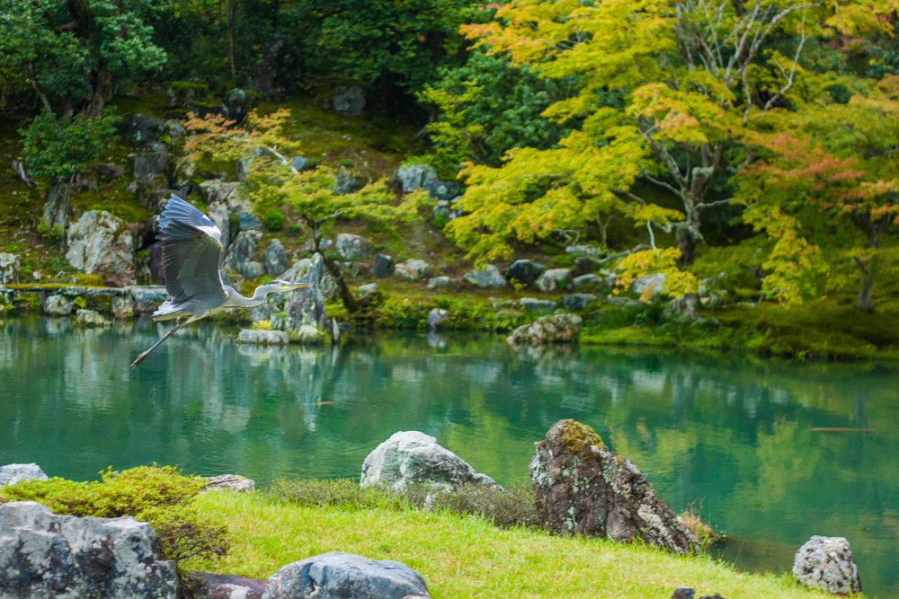 Your Ultimate Guide to Exploring the Village of Arashiyama: What to See, Buy and Eat!