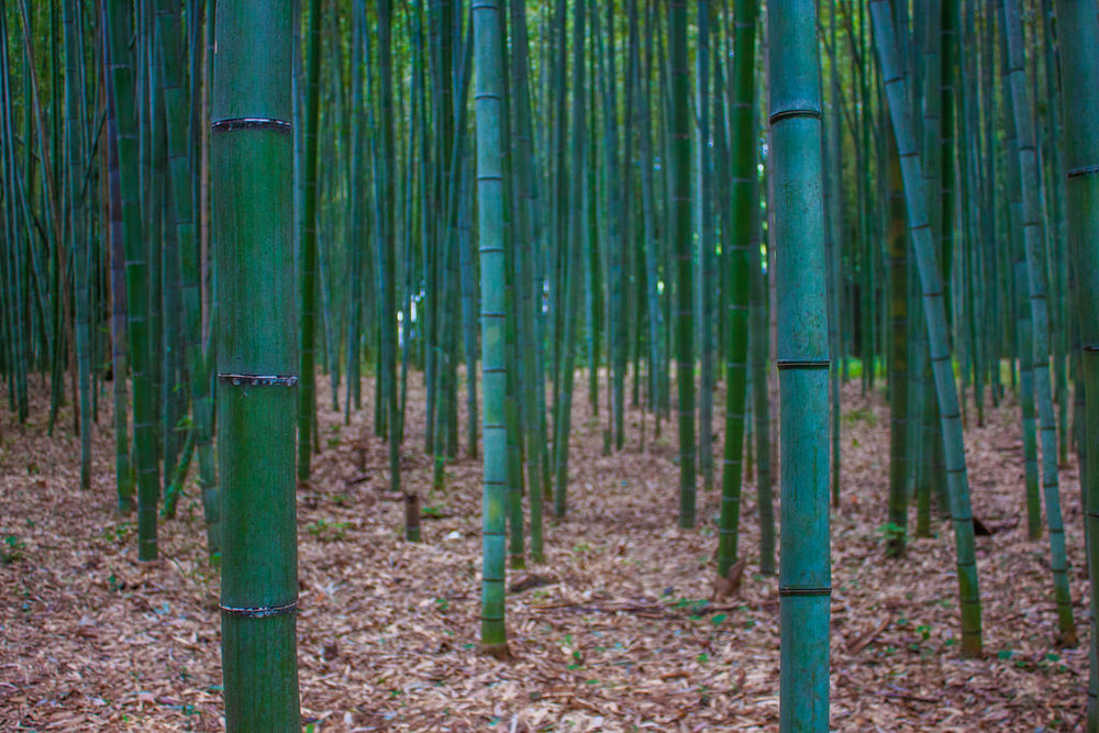 Our Guide to Exploring the Natural Wonders of the Beautiful Arashiyama Bamboo Grove