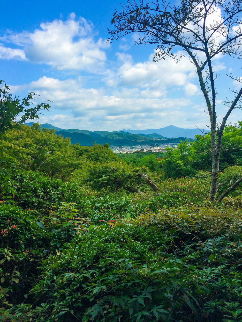 30064783710_248bb26c2d_k.jpgGuide to Visiting Kyoto's Okochi Sanso, Arashiyama's Stunning Traditional Japanese Villa and Zen Garden