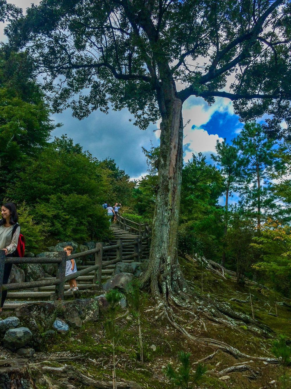 29730039493_e499bc18a9_k.jpgA Guide to Finding your Zen in the Peaceful and Serene Gardens of Tenryu-ji Temple Arashiyama