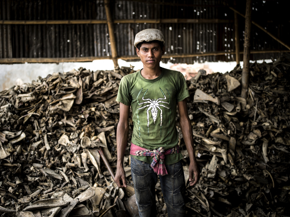 A boy working at a bone mill.