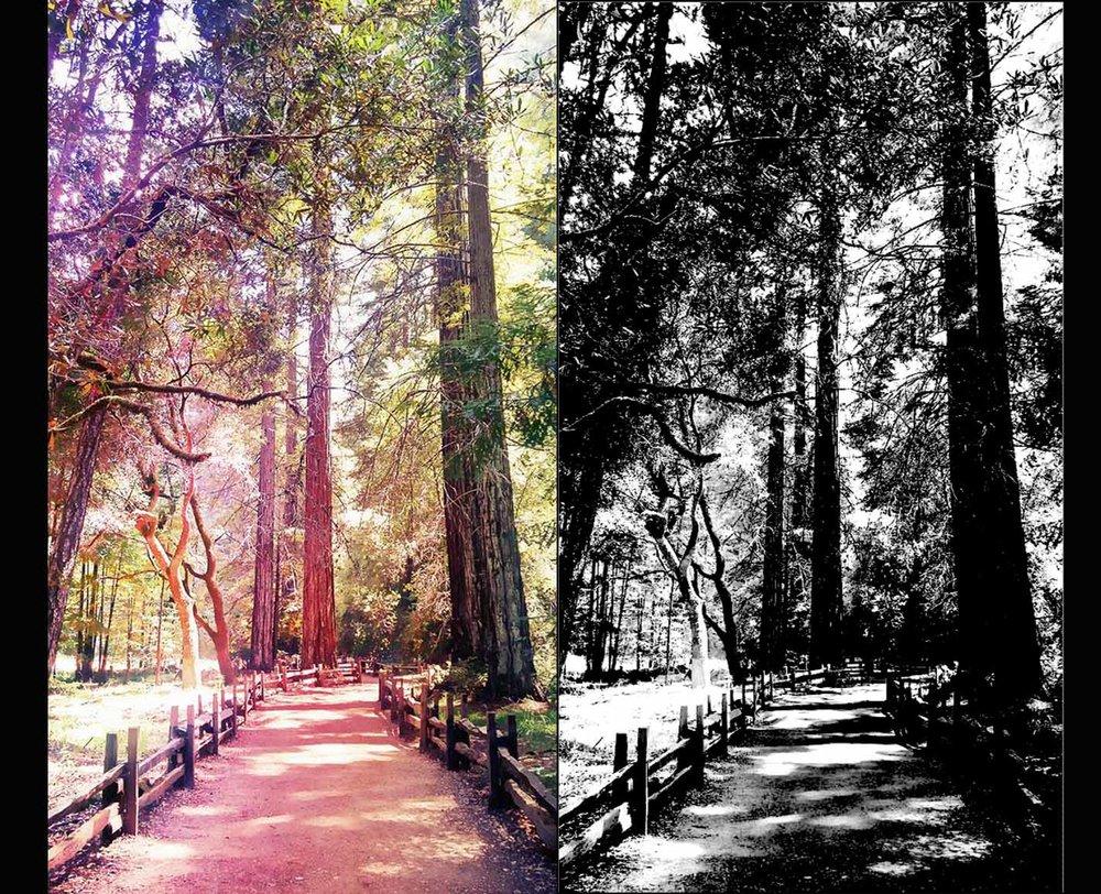 RedwoodsAlphatst.jpg