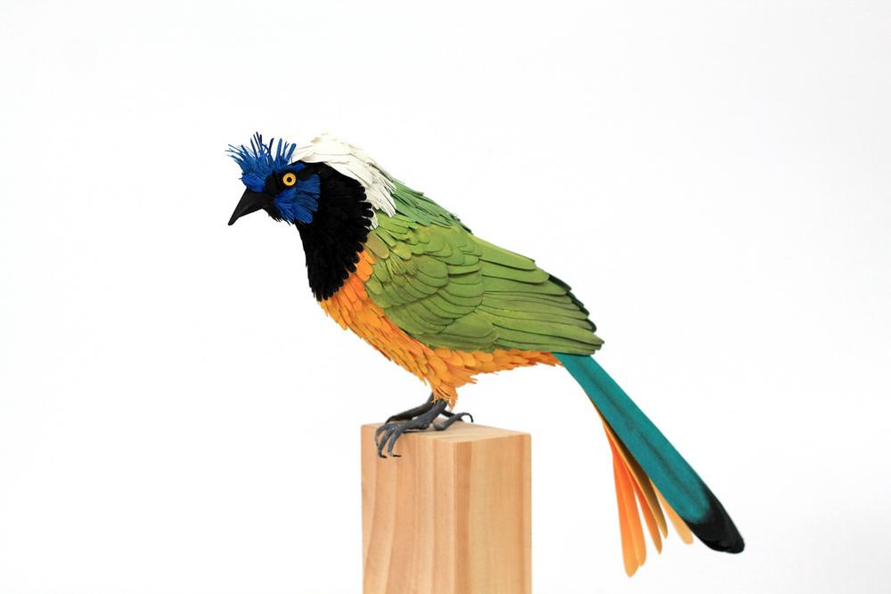 bird_1012796_orig.jpg