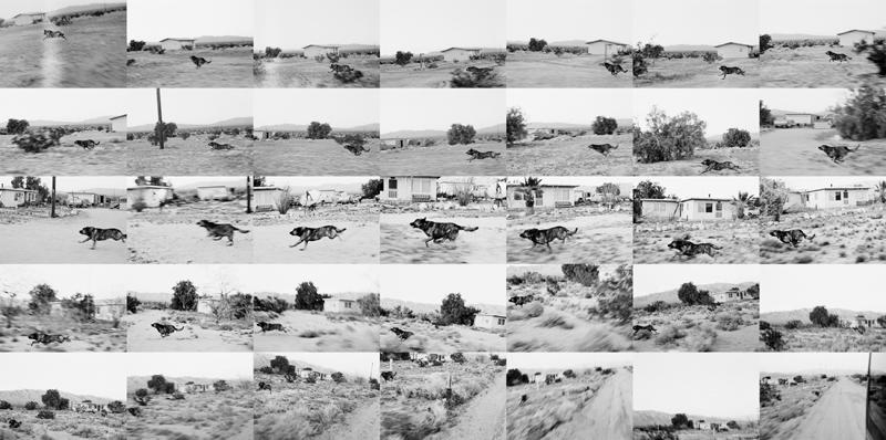 Dog Sequences / D25F01-35 Seq John Divola 1996-2001