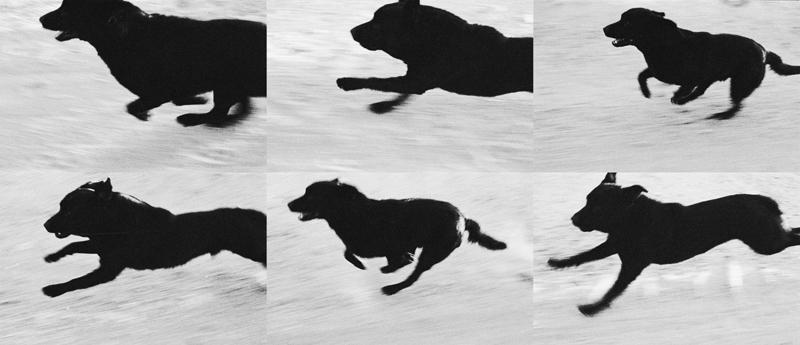 D24 Run Sequence John Divola 1996-2001