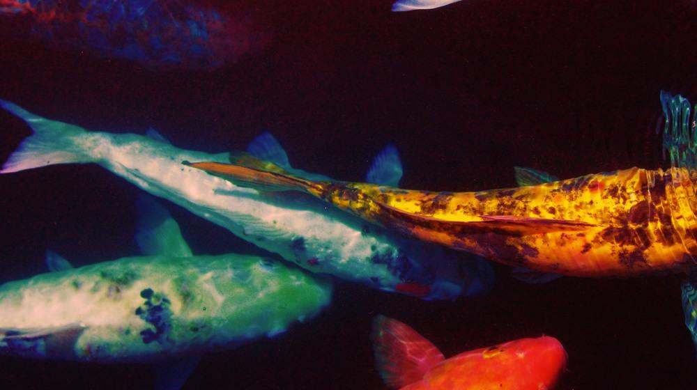 fishc.jpg
