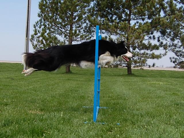 margarets dogs 071.jpg