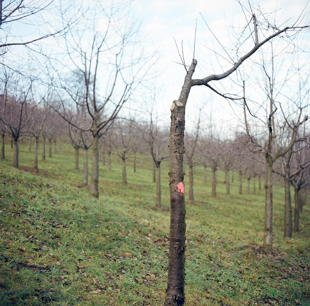 009_treewithpinkspot.jpg