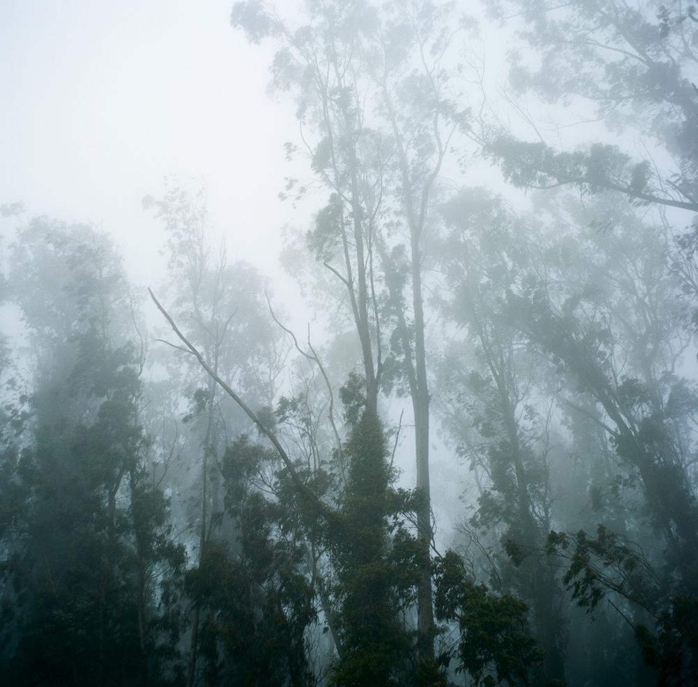 013_1528_foggywoods.jpg