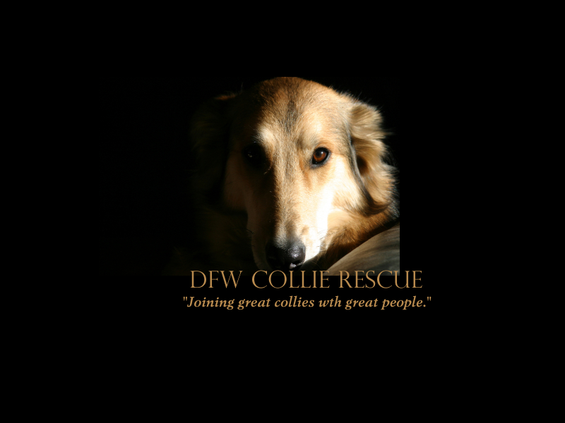 DFW Collie Rescue