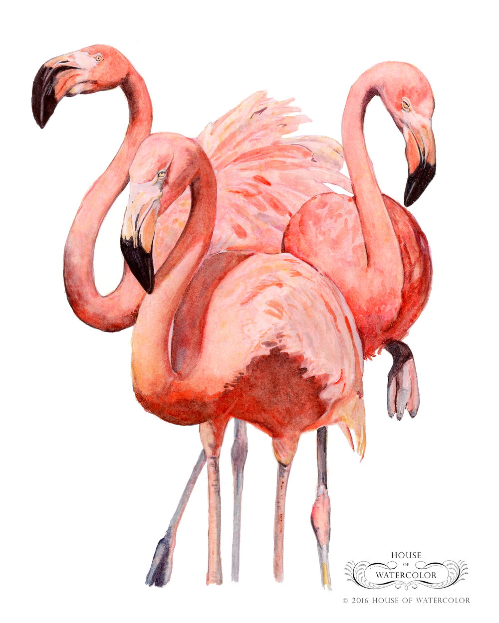 House-of-Watercolor-Mean-Flamingos-Portfolio.png