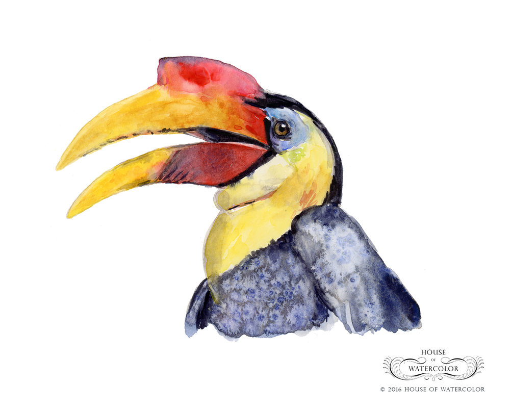 House-of-Watercolor-Male-Wrinkled-Hornbill-Portfolio.png