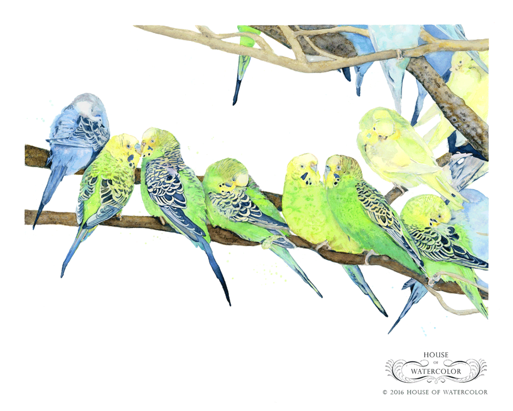 House-of-Watercolor-Brilliance-of-Budgies-Portfolio.png