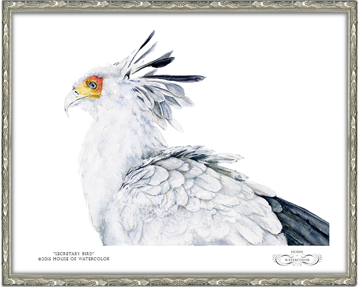 House-of-Watercolor---Secretary-Bird-Frame.png