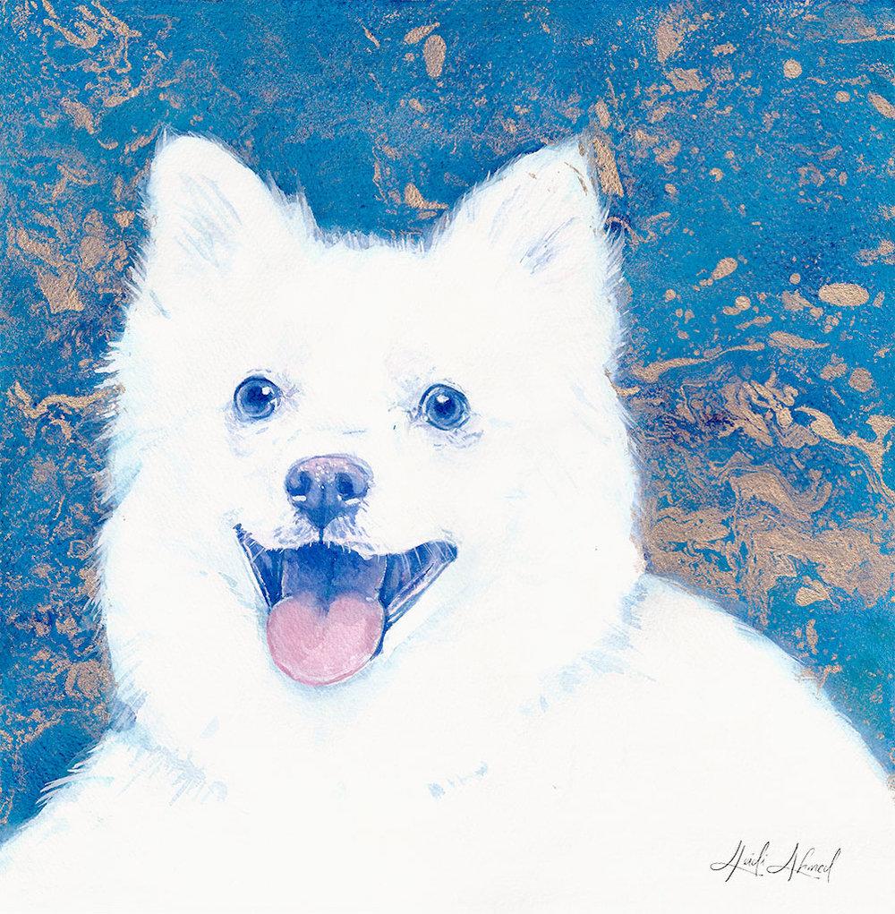 American-Eskimo-Dog-Portrait-Web.jpg