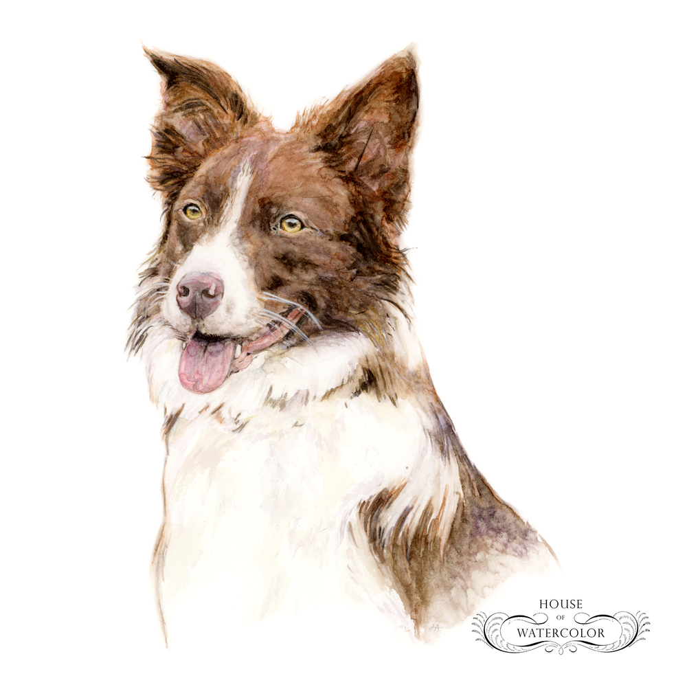 Pet-Portrait_River-Song_House-of-Watercolor.png