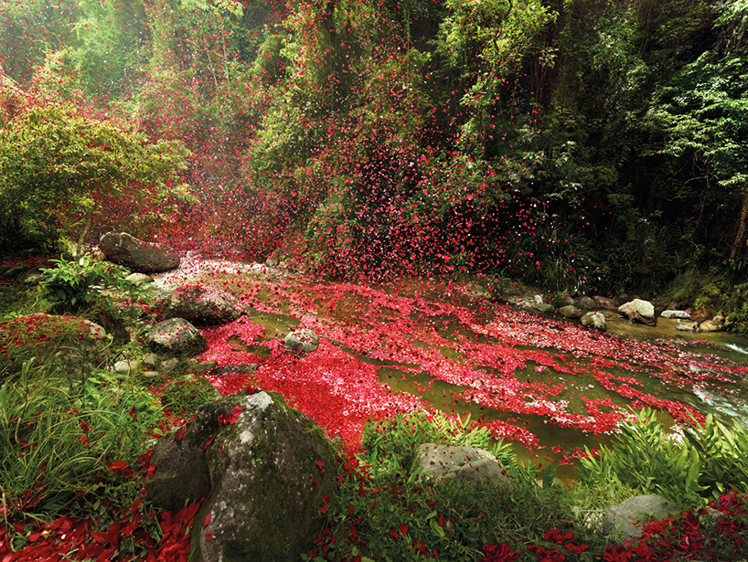 nick-meek-photographs-flower-petals-in-HD-designboom-01.jpg
