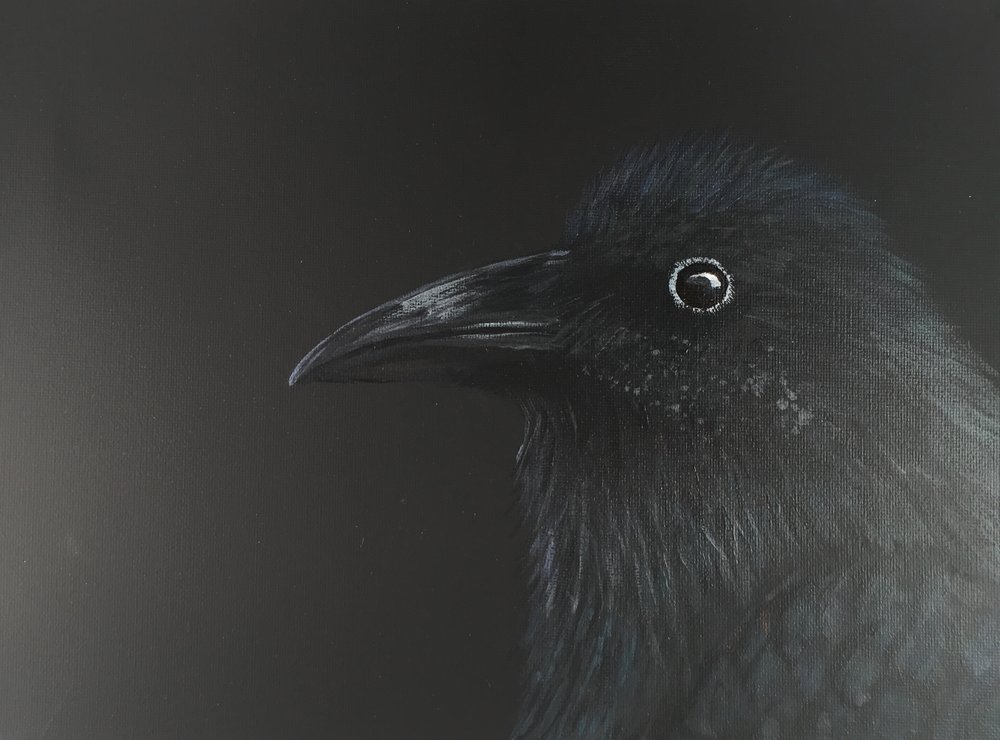 """Young Raven""  by Sarah Mandell (January 30th, 2018)"
