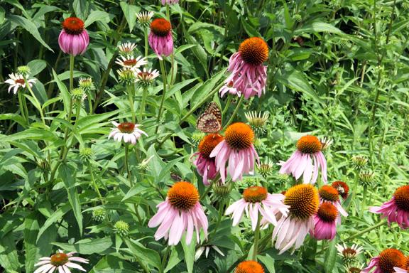 butterfly-IMG_7653.jpg