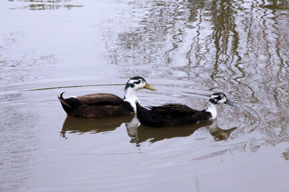 duck-pond-IMG_9853.jpg