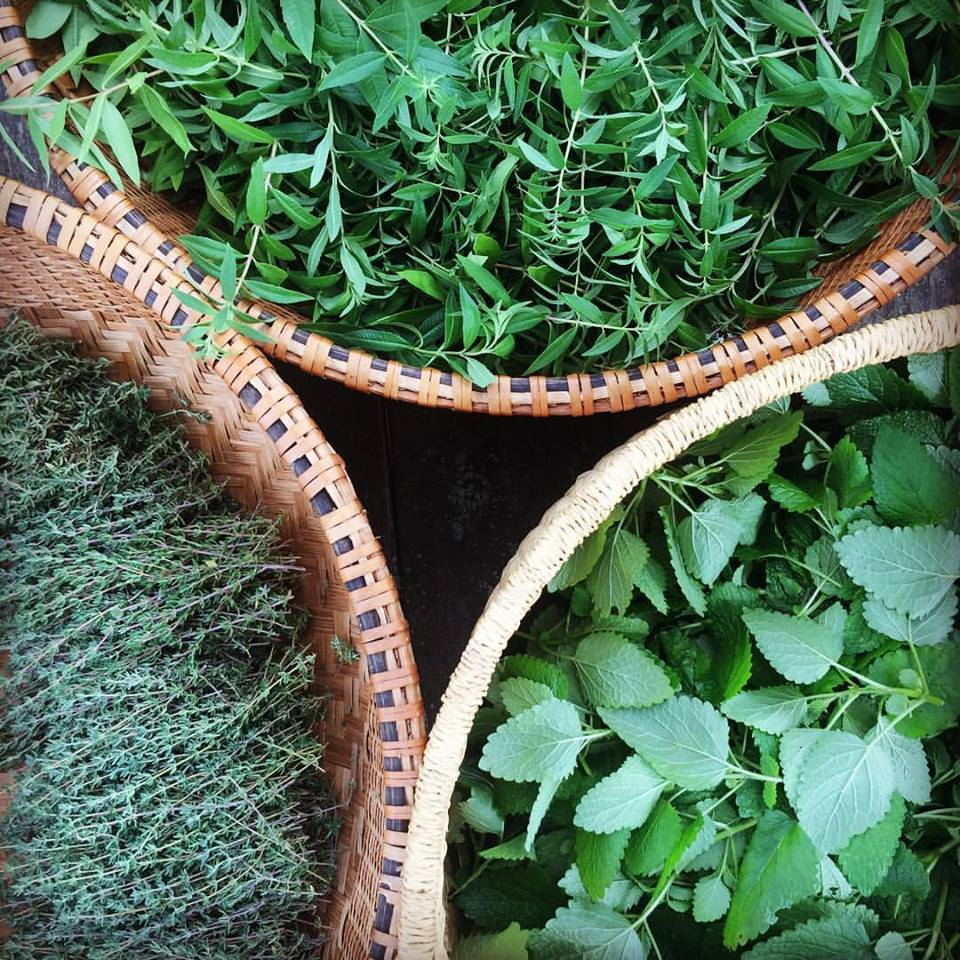 three-herbs-basket.jpg
