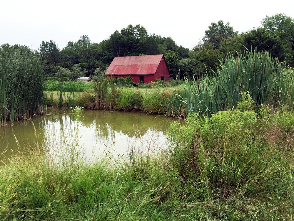duckpond-barn_1656.jpg