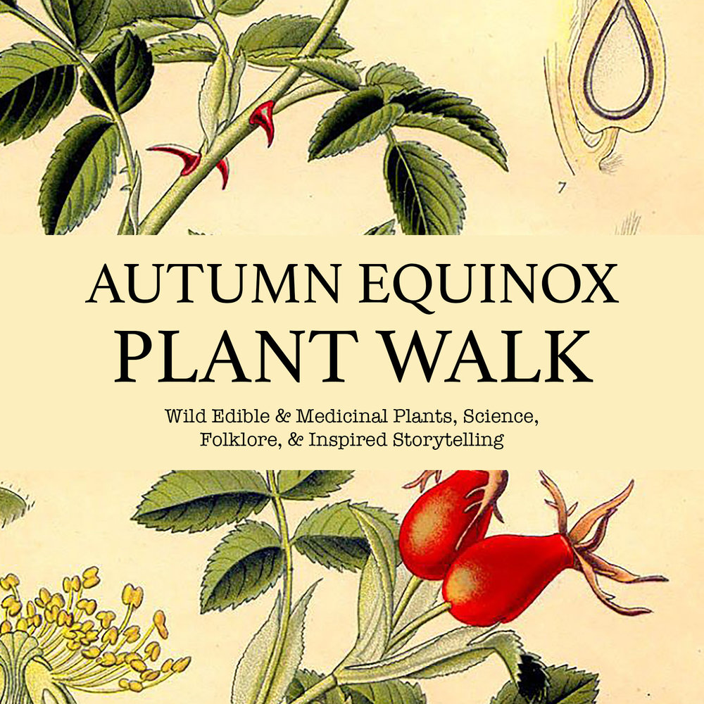 Autumn-Equinox-Plant-Walk-Promo.jpg