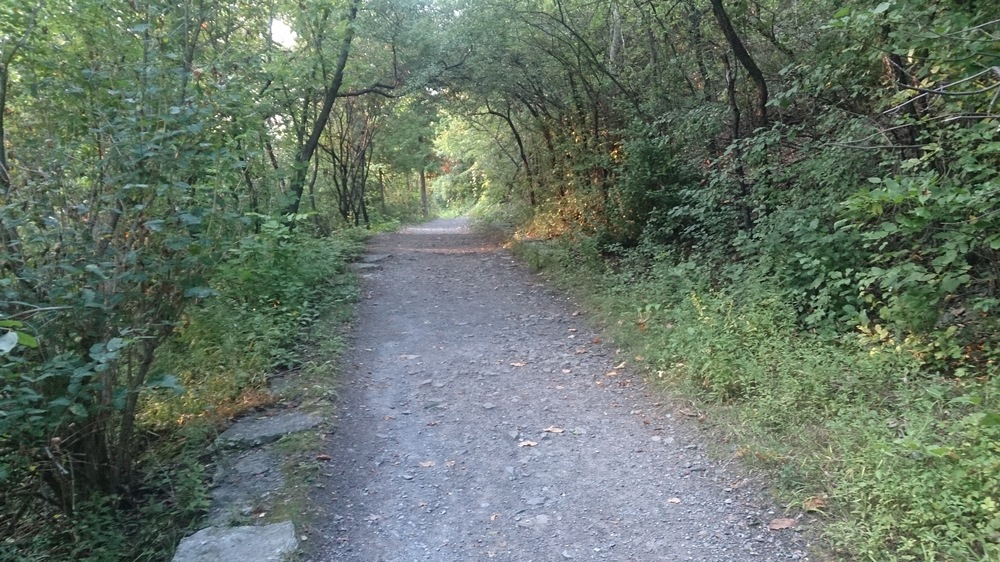 A cool little hiking trail near the Rideau Falls