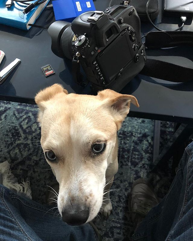 He always seems to know when I'm packing for a shoot.