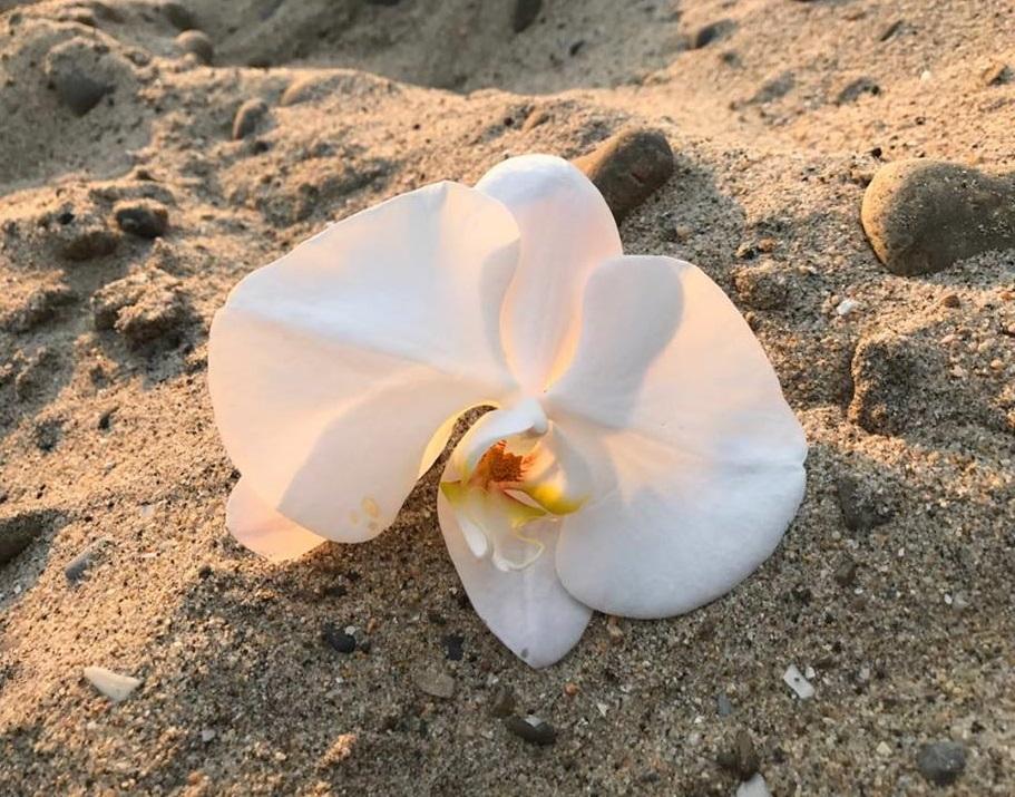 larry jones celebration of life white orchid.jpg