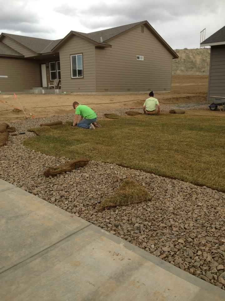 Laying sod in early march.
